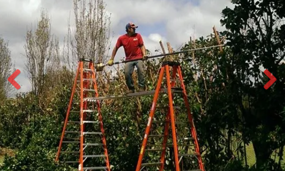 Shaw's Tree Service picture